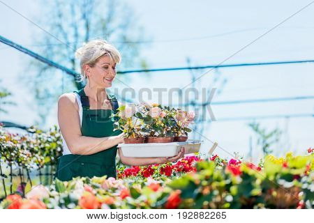 Attractive gardener selecting flowers in a gardening center. Gardening and work concept.