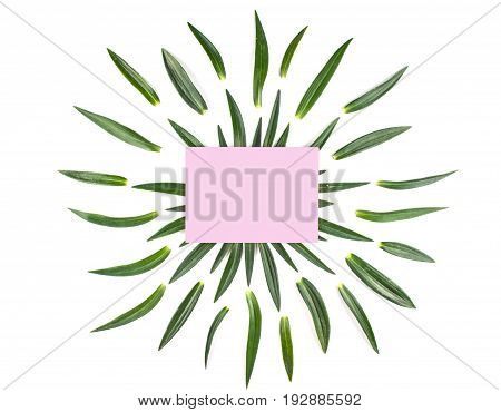 Frame with leaves isolated on white background. Flat lay style overhead view.