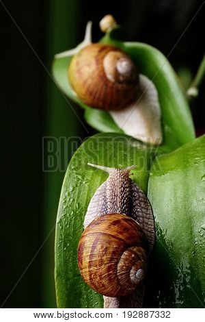 Snail Family .little Snail Mother And Father Snail.analogy.concept Of Family.selective Focus. Focus