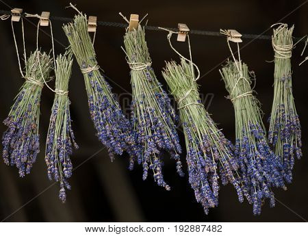 Lavender hanging. Drying process.