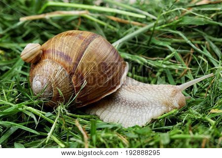 Snail Family .little Snail On Mother Snail.analogy.concept Of Family.copy Space