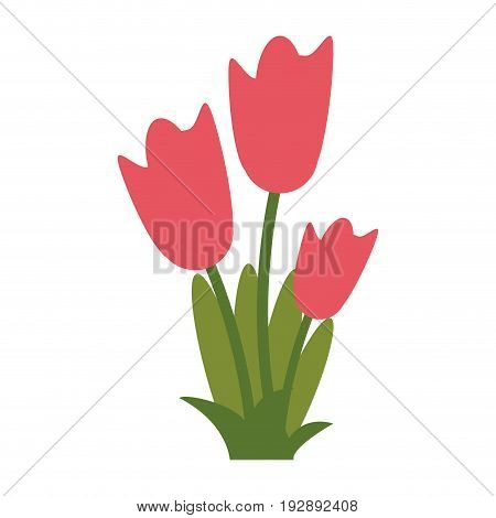 wild flower tulips icon image vector illustration design