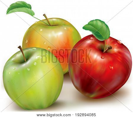 Realistic vector illustration of red green and orange apples