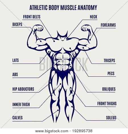 Athletic body muscle anatomy ballpoint pen colors poster. Vector illustration