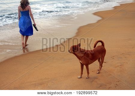 Red dog and the lonely girl at coast