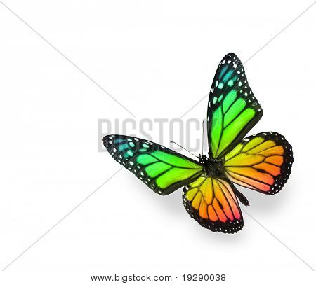 Rainbow Color Butterfly on White Background. Soft shadow underneath.