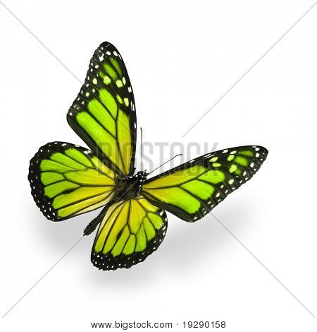 Green color enhanced butterfly Isolated on White. Soft shadow underneath.