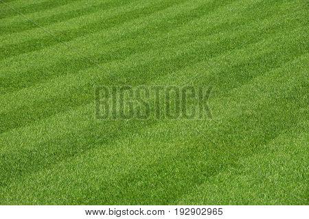Green Fresh Grass Lawn Of Football Field