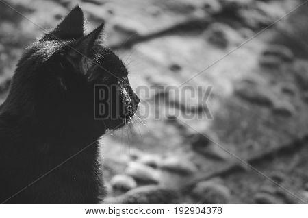 Black Cats Profile