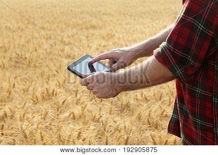 Agriculture, Farmer Examining Wheat Field