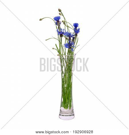 A bouquet of blue spring flowers in a glass transparent vase is isolated on a white background