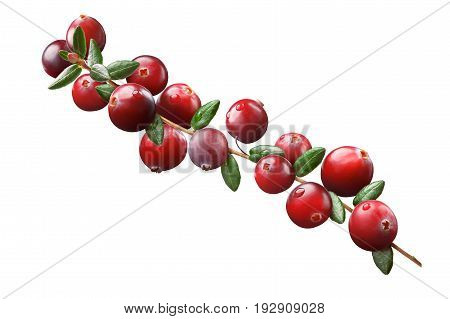Cranberry Branch Composition, Clipping Paths