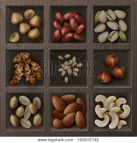 Vector set of different nuts hazelnuts, pistachio, peanuts, cashew, cedar and walnuts top view in wooden box