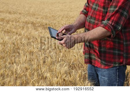 Agronomist or farmer inspecting quality of wheat plant field using tablet ready for harvest