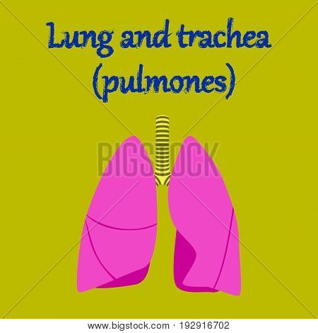human organ icon in flat style lungs and trachea