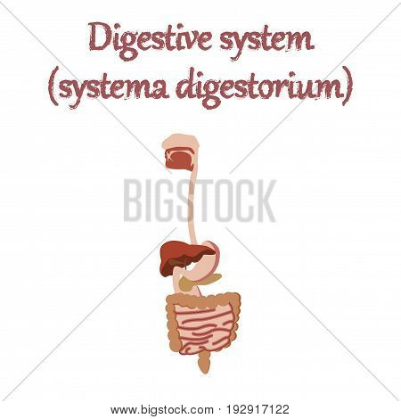 human organ icon in flat style digestive system