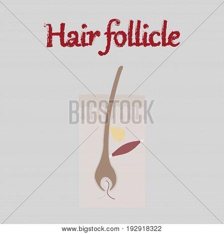 human organ icon in flat style hair follicles