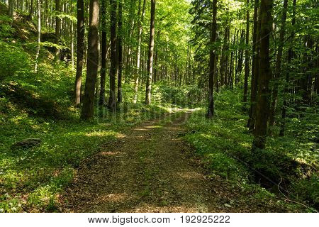 Narrow path lit by soft spring sunlight. Forest spring nature. Spring forest natural landscape with forest trees