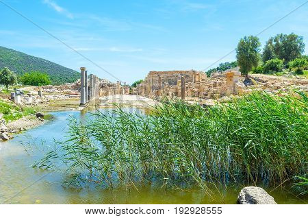The Reed Beds In Agora