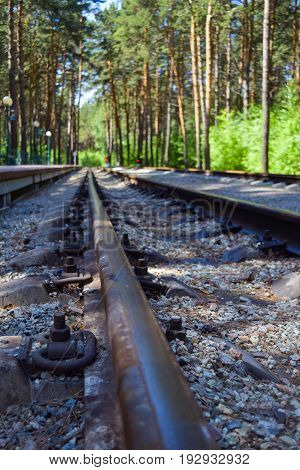Railway rails leaving in the distance against the backdrop of a beautiful pine forest
