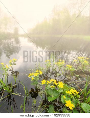 Sunset in the river fog backwater with yellow flowers