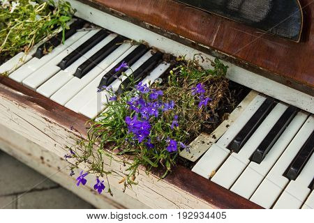 The Old White Piano With Purple Flowers On The Street.