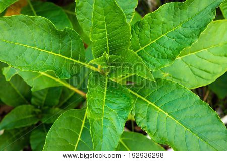 A close up of a plant with lots of leaves