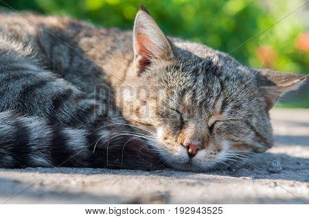 funny cat sweet sleeping on an asphalt road