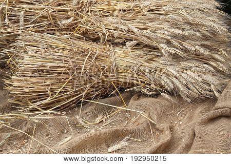 Mature Ears Of Wheat On   Jute Fabric