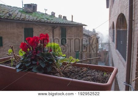 The view of red flowers in a flower pot with street on background.