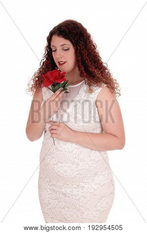 A beautiful young woman in a white dress standing isolated for white background holding a red rose to her face.