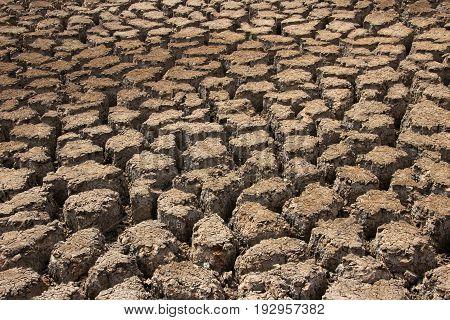 Dry earth texture pattern, National Park Llanos De Challe, Atacama, Chile, Sout America