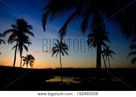 Beautiful sunrise among palm trees on the beach with cloudless sky.
