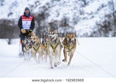 SARDIERES VANOISE FRANCE - JANUARY 18 2016 - the GRANDE ODYSSEE the hardest mushers race in savoie Mont-Blanc Vanoise Alps