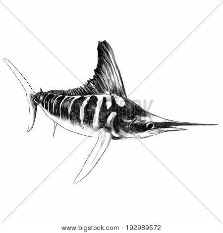 fish blue Marlin swordfish pointed toe sailing sketch vector graphics black and white drawing