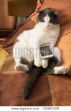 Dissatisfied cat sitting on a plaid with smartphone