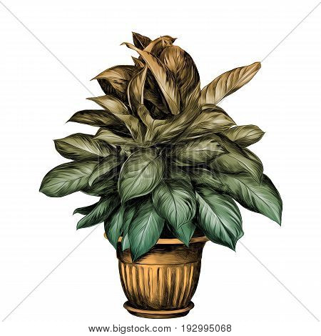 the flower pot aglaonema sketch vector graphics colored drawing gradient turquoise green yellow beige pot