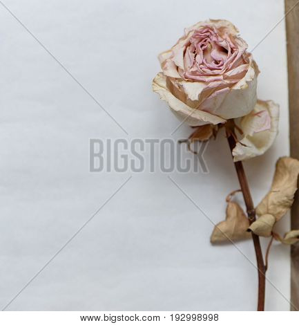 Dried Faded Roses On Old Paper On Wooden Background