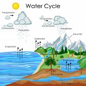 Education Chart of Biology for Water Cycle Diagram. Vector illustration poster