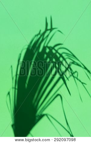 Silhouette Of Spiky Feathery Dangling Palm Leaf On Green Background. Hard Light Harsh Shadows. Tropi
