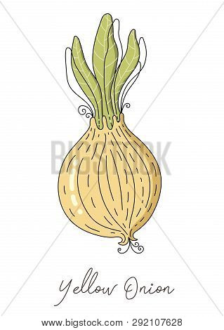 Onion Isolated Vector. Onion Isolated Vector Illustration For Kitchen Poster, Package, Advertise, Me