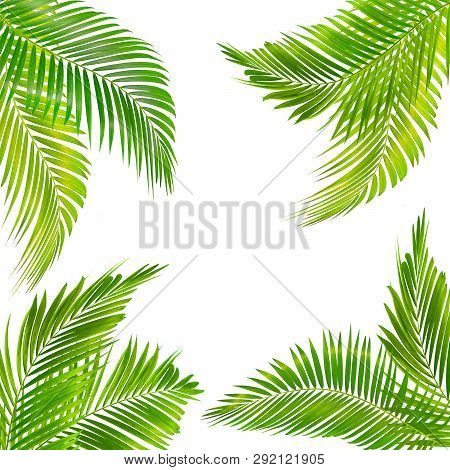 Frame For Text Made From Green Palm Leaf Isolated On  White Background