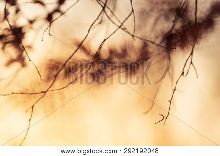 Springtime Nature Abstract Background. Nature Abstract Background Of Cherry Tree Blurred. Abstract N