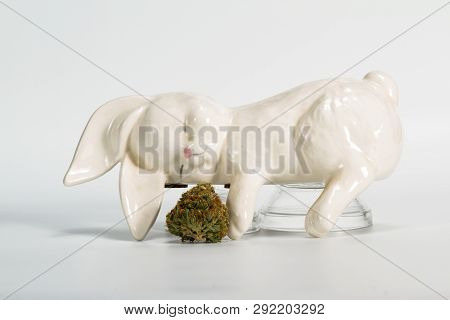 Stoned Bunny Over White
