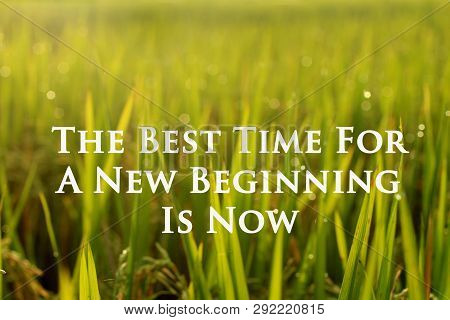 Inspirational Quote- The Best Time For A New Beginning Is Now. With Morning Light Over The Fresh Pad