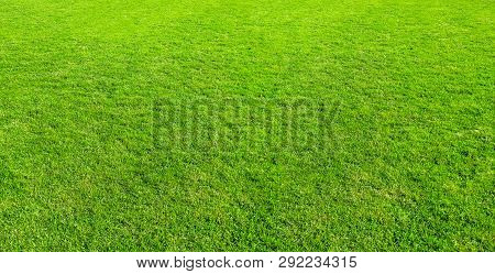 Landscape Of Grass Field In Green Public Park Use As Natural Background Or Backdrop. Green Grass Tex