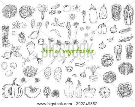 Big Set With Vegetables In Sketch Style. Vector Illustration For Your Design