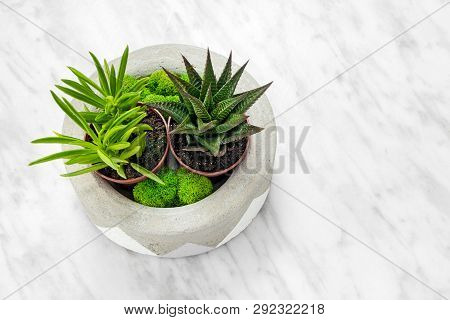 Handmade Concrete Planter With Succulents And Moss, On Marble Background. Home Decor.