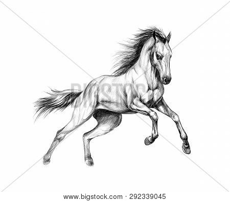 Horse Run Gallop On A White Background. Hand Drawn Sketch. Vector Illustration Of Paints