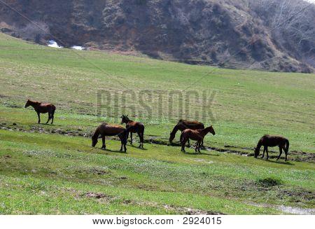 Pferde sind Weide